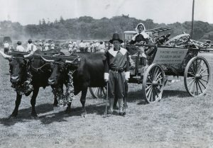 Black and white photo, woman and man dressed like pilgrims with wagon drawn by oxen